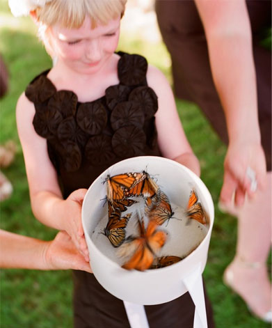 Release Butterflies at your Wedding