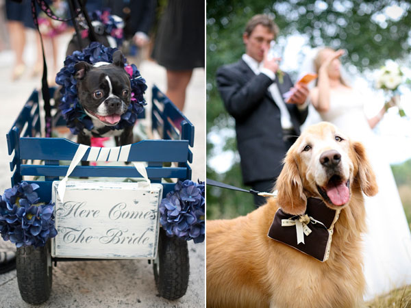 5 Roles Your Dog Could Play At Your Wedding BG Blog